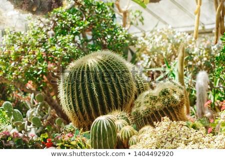 cacto · parque · canárias · natureza · linha · do · horizonte - foto stock © bmonteny