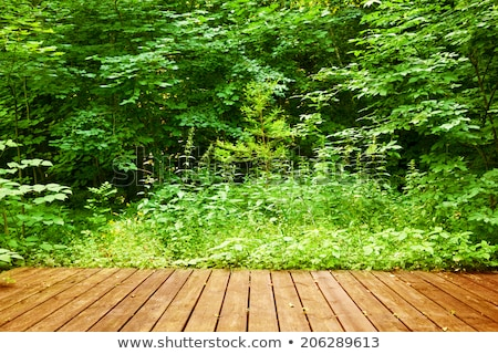 Wooden floor in a green forest. Spa, welness, nature Stock photo © photocreo