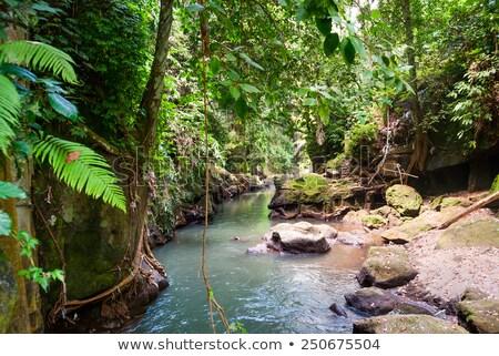 Bridge over river in the jungle of Bali Stock photo © dinozzaver