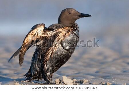 Poor bird Stock photo © Hofmeester