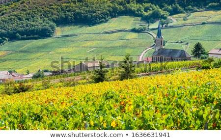 виноградник · мнение · деревне · Франция · известный · вино - Сток-фото © Hofmeester