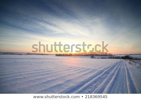 Invierno paisaje hermosa cielo árbol luz Foto stock © H2O