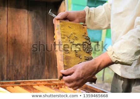 favo · de · mel · abelhas · mãos · olhando · homem - foto stock © deyangeorgiev