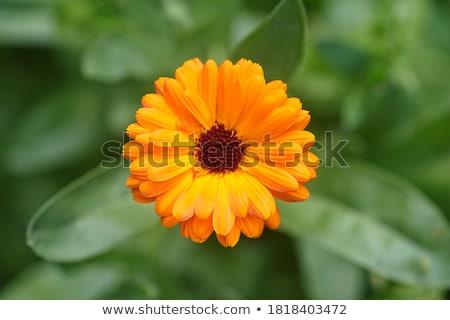 Flores vista Blur jardín fondo Foto stock © mahout