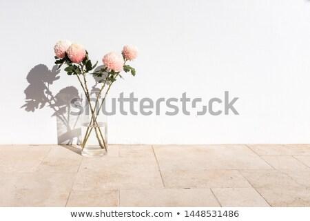 Krizantem çiçekler vazo siyah çiçek bahar Stok fotoğraf © mady70