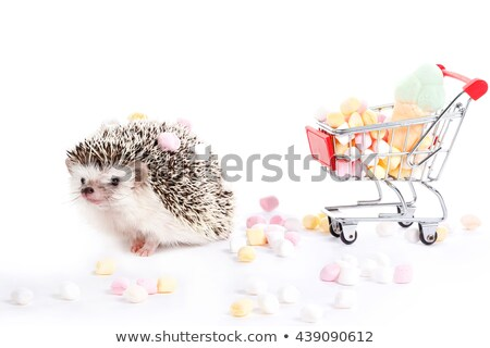 Zoete jonge egel witte studio gelukkig Stockfoto © vauvau