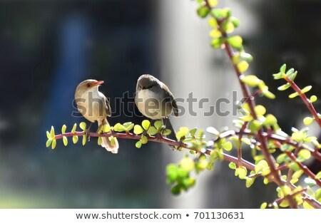 velho · amor · árvore · enforcamento · corações · muitos - foto stock © bluering