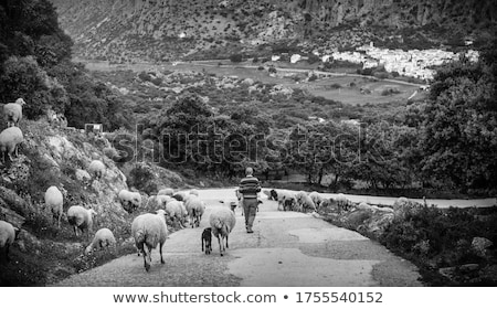 herd of sheep in the mountains of andalusia Stock photo © compuinfoto