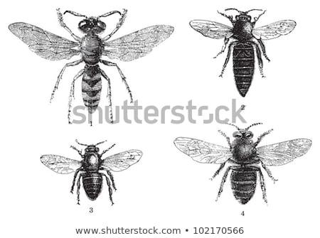 Vektor Sommer Illustration Insekt Natur Form Stock foto © Olena