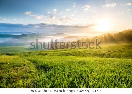 Green farm field in the foggy morning Stock photo © hraska