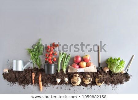Organik gıda meyve yeşil kırmızı biber havuç Stok fotoğraf © nenovbrothers