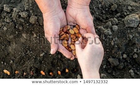 Grandmother handing girl seeds to plant Stock photo © IS2