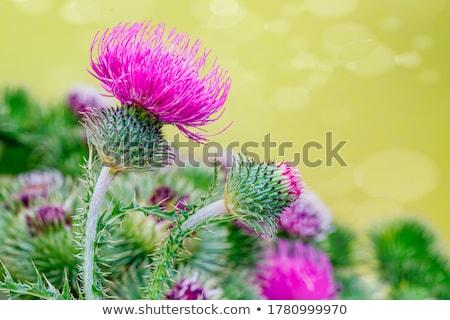 Yaprakları çiçek düğün doğa dizayn Stok fotoğraf © odina222