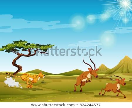 Gepárd szarvas jelenet illusztráció terv háttér Stock fotó © bluering