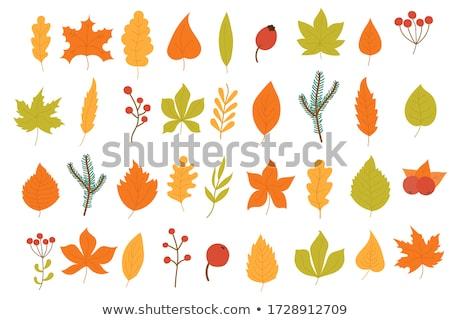 Abstract Dry Autumn Tree Vector Art Illustration Design Set Stock photo © svvell