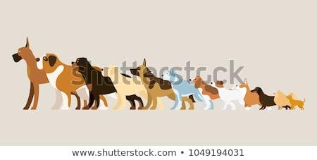 Chiot saint rottweiler blanche chien animal Photo stock © cynoclub