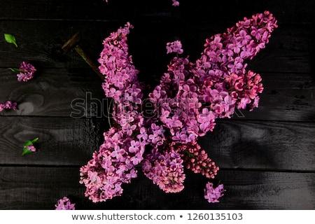 Gyönyörű orgona virágcsokor fekete fából készült tavasz Stock fotó © Illia