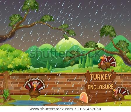 Zoo scène pluie illustration mur paysage Photo stock © colematt