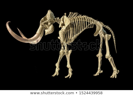 Esqueleto realista ilustração 3d vista lateral lado preto Foto stock © Pixelchaos