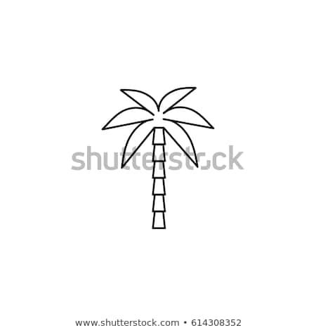 Palmboom lijn icon vector afbeelding object Stockfoto © smoki