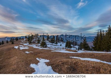 Drzew pokryty śniegu zimą drzewo charakter Zdjęcia stock © AndreyPopov