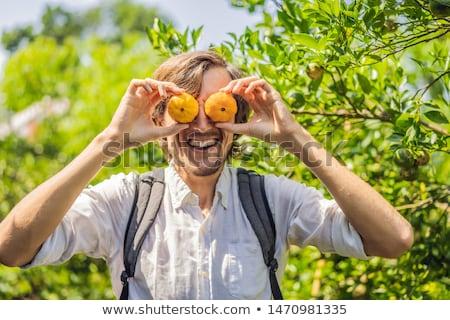 Homem tangerina plantação comida natureza jardim Foto stock © galitskaya