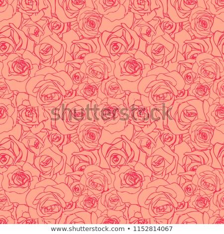 Gyönyörű rózsaszín skicc vanília végtelen minta rózsa Stock fotó © evgeny89