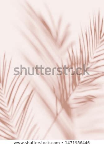 розовый лист большой черный мелкий Focus Сток-фото © THP