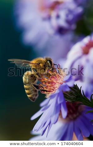Mel de abelha folha flor natureza jardim laranja Foto stock © chrisroll