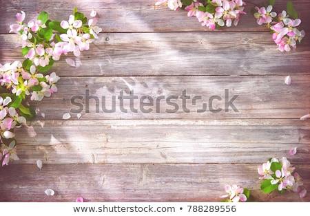 árvore frutífera flor primavera foco marrom natureza Foto stock © REDPIXEL