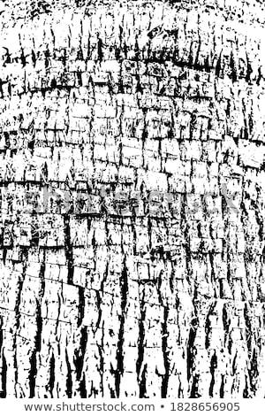 fal · építkezés · vidék · fából · készült · ház · részletek - stock fotó © taigi