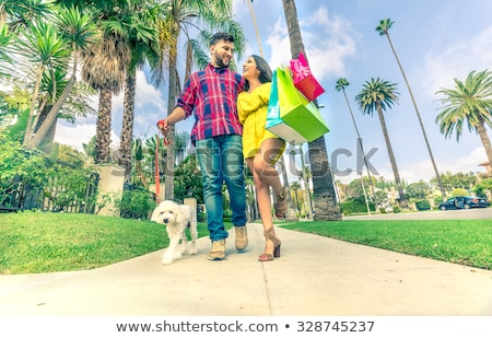Two poodle dog standing Stock photo © raywoo