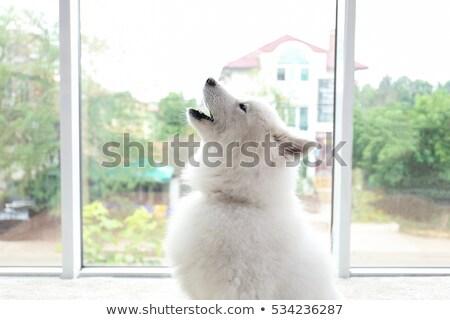 Kutya vektor rajz vicces aranyos tájkép Stock fotó © pcanzo