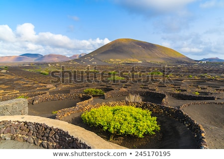 La Geria - vineyard region of Lanzarote, Canary Islands Stock photo © meinzahn