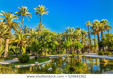 palm tree forest in elche spain stock photo © lunamarina