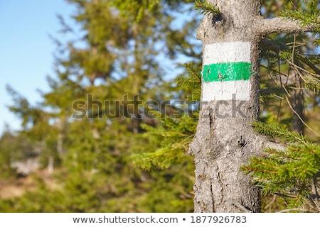 Sentier signes montagnes Pologne Voyage Rock Photo stock © janhetman