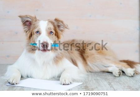 коричневая · собака · Cartoon · иллюстрация · вектора - Сток-фото © derocz