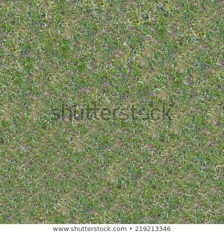 Grassplot with Green and Yellowed Grass. Stock photo © tashatuvango