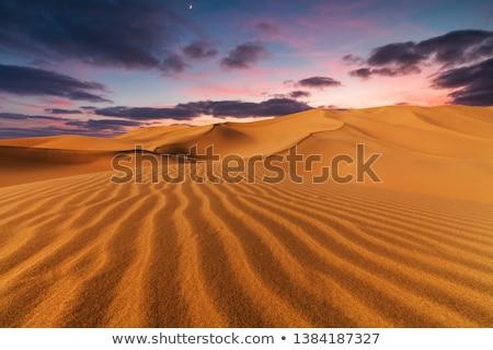 Stock fotó: Szahara · sivatag · dűne · víz · fa · fény