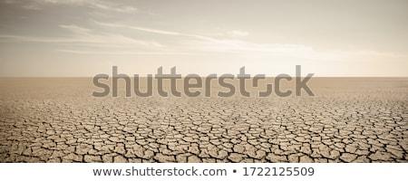 cracked earth, a desert Stock photo © H2O