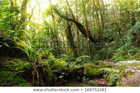 Pad wild groene regenwoud toerisme manier Stockfoto © cienpies