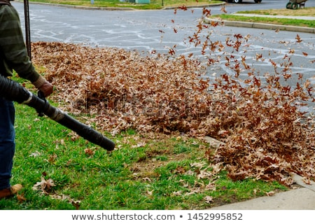 Worker in the park in autumn collects leaves with leaf blower Stock photo © smuki