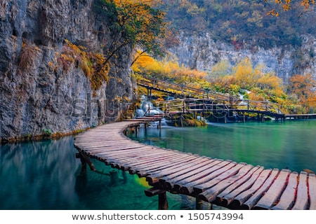 stream in autumn mountain forest stock photo © rognar