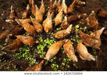 Organik gıda sağlıklı kırsal gıda arka plan buğday Stok fotoğraf © JanPietruszka