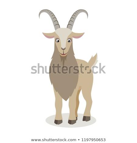 Meglepődött rajz kecske illusztráció néz Stock fotó © cthoman