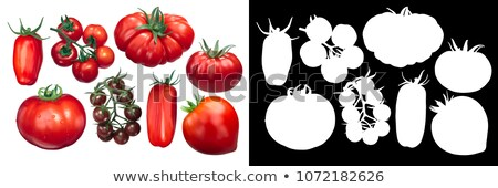 Marglobe tomatoes on the vine Stock photo © maxsol7