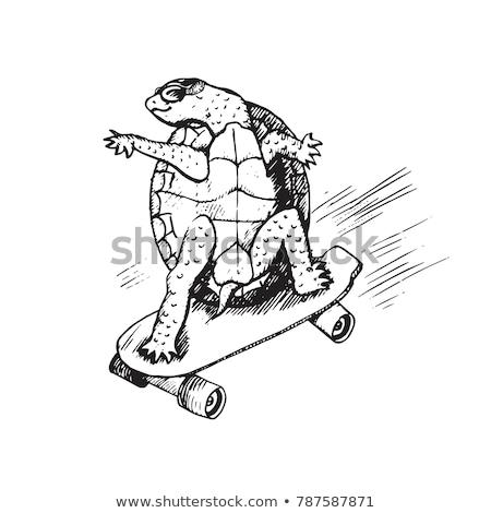 Dier schets schildpad lopen illustratie achtergrond Stockfoto © colematt