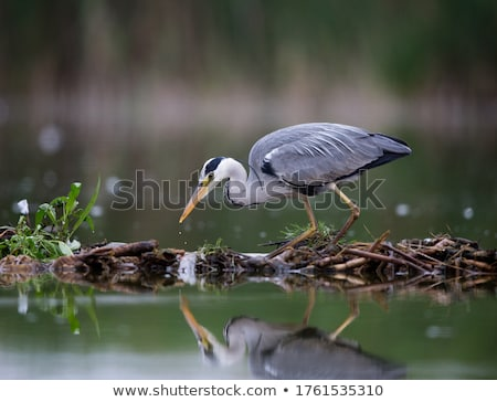большой · птица · болото · Постоянный · искусственный · деревья - Сток-фото © taviphoto