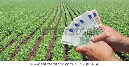 Agricultural concept, farmer, money and soybean field Stock photo © simazoran