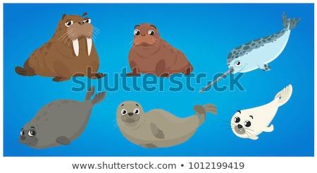 セット セイウチ 文字 実例 海 背景 ストックフォト © colematt